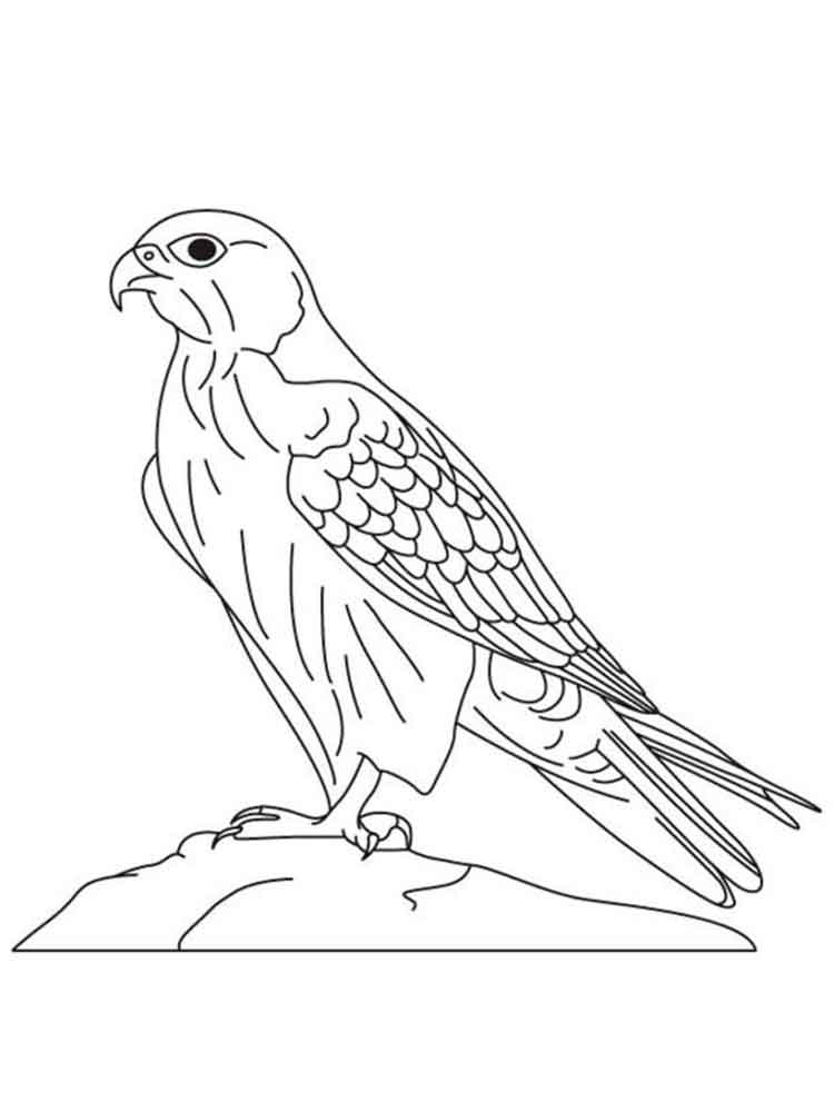 Falcons Coloring Pages Download And Print Falcons