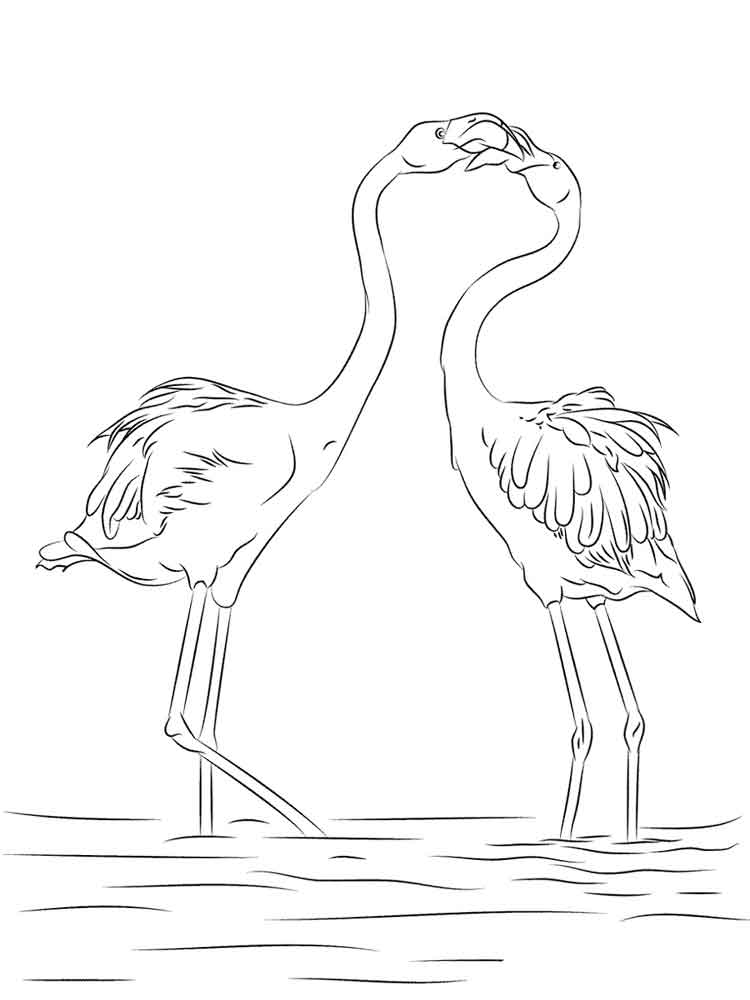 flamingos birds coloring pages 13 - Flamingo Coloring Page