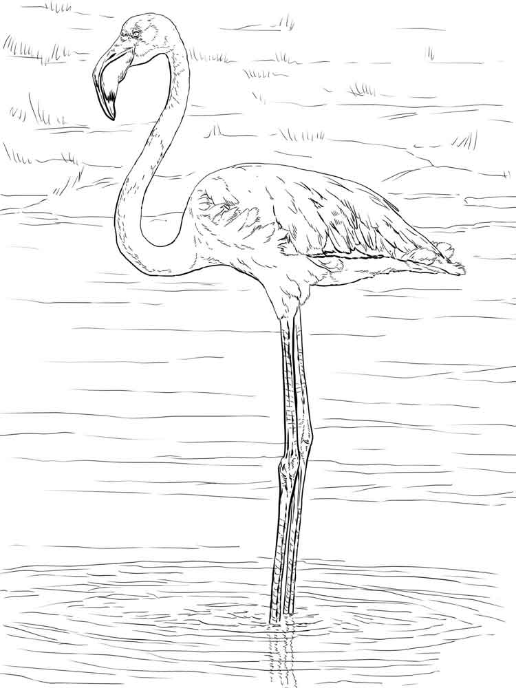 Flamingo coloring pages download and print flamingo for Flamingo beak template