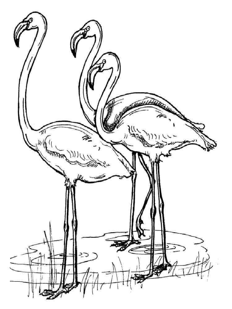 Flamingo Coloring Page Alluring Flamingo Coloring Pagesdownload And Print Flamingo Coloring Pages Design Ideas