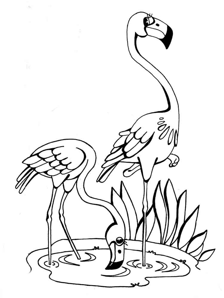 flamingo coloring pages printable flamingo coloring pages and print flamingo - Flamingo Coloring Pages