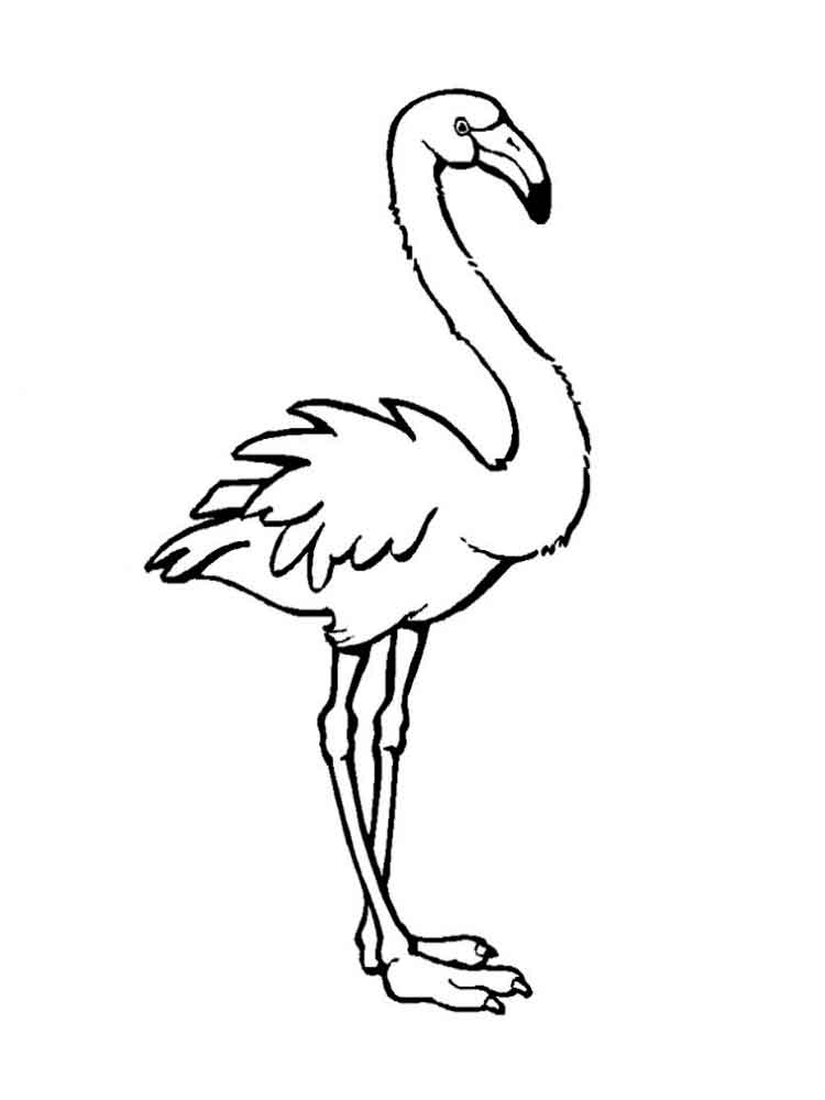Image Result For Emu Coloring Book