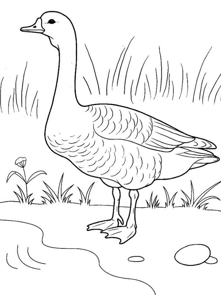 Goose coloring pages Download and print Goose coloring pages