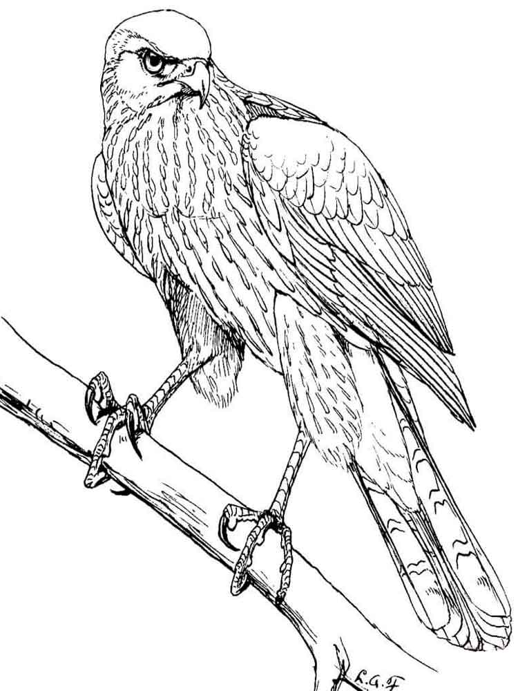 free coloring pages storm hawks - photo#29