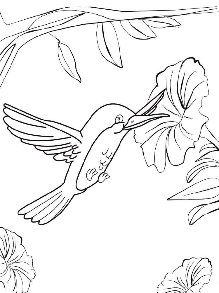 Hummingbird coloring pages Download and print Hummingbird