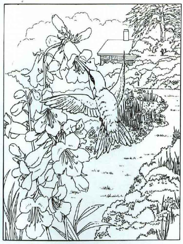 82 Backyard Bird Coloring Page