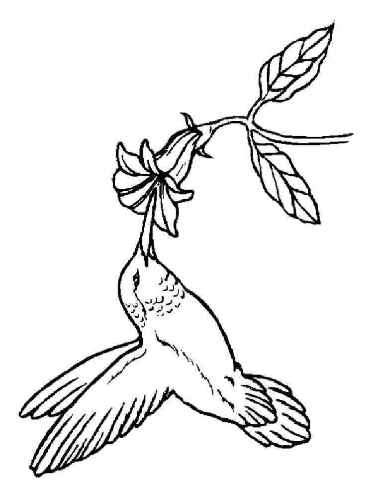 Hummingbird Coloring Pages Download And Print Hummingbird