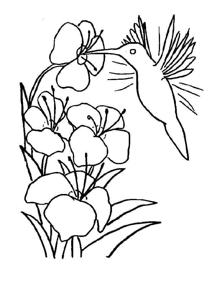 Hummingbird coloring pages. Download and print Hummingbird ...