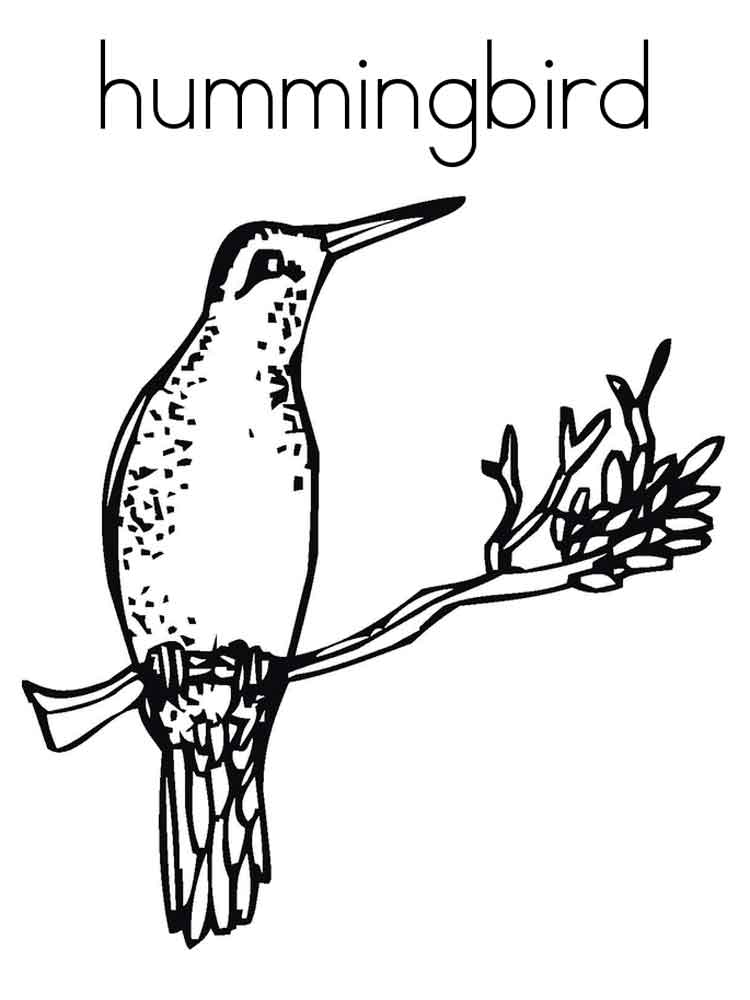 Hummingbird coloring pages download and print hummingbird for Coloring pages of hummingbirds