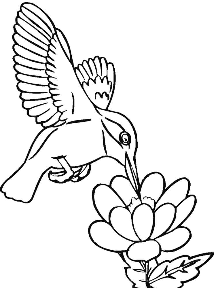 hummingbirds birds coloring pages 6 - Hummingbird Coloring Pages