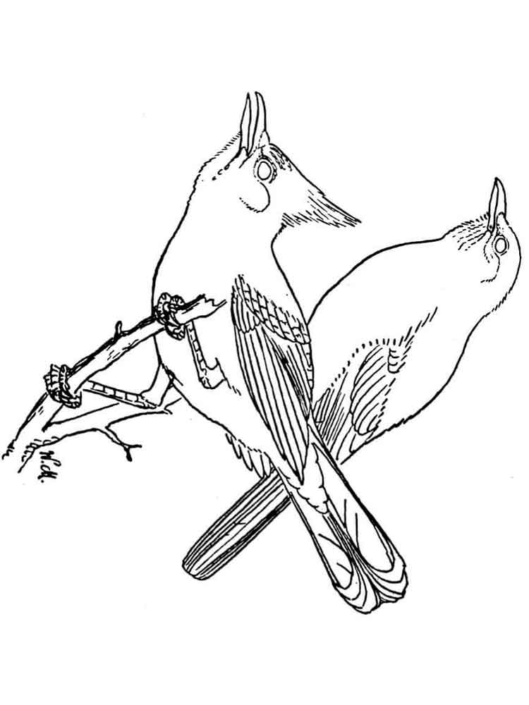 Blue Jay coloring pages Download and print Blue Jay