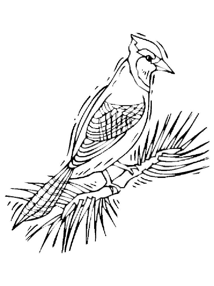 Blue jay coloring pages download and print blue jay for Blue jay coloring page