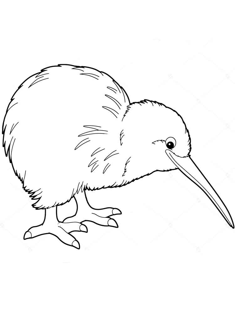 kiwi bird coloring page kiwi coloring pages download and print kiwi coloring pages