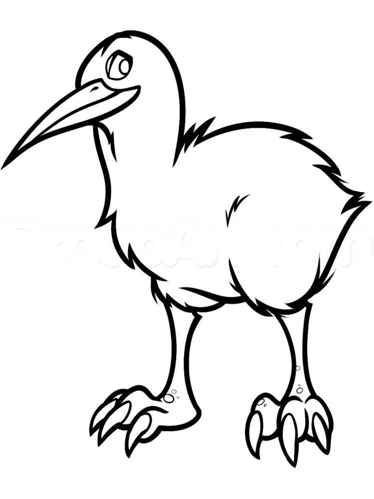 Kiwi coloring pages Download and print Kiwi coloring pages