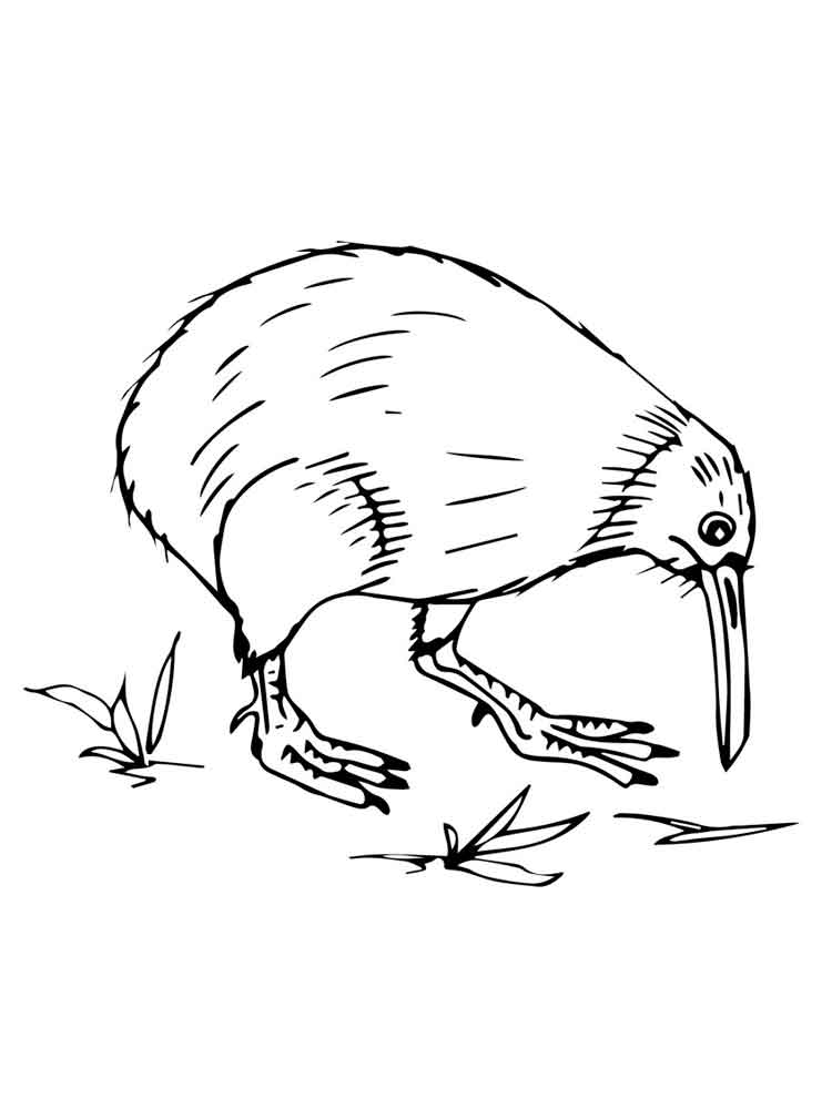 Colouring Pictures Of Kiwi Birds : Kiwi coloring pages download and print