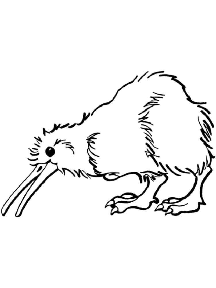 Kiwi coloring pages Download and
