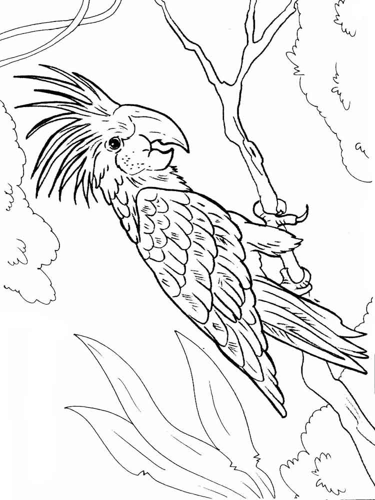 Images Flying Macaw Coloring Pages