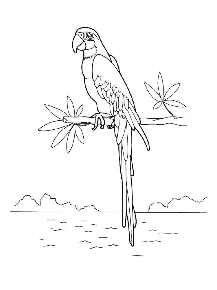 Macaw coloring pages Download