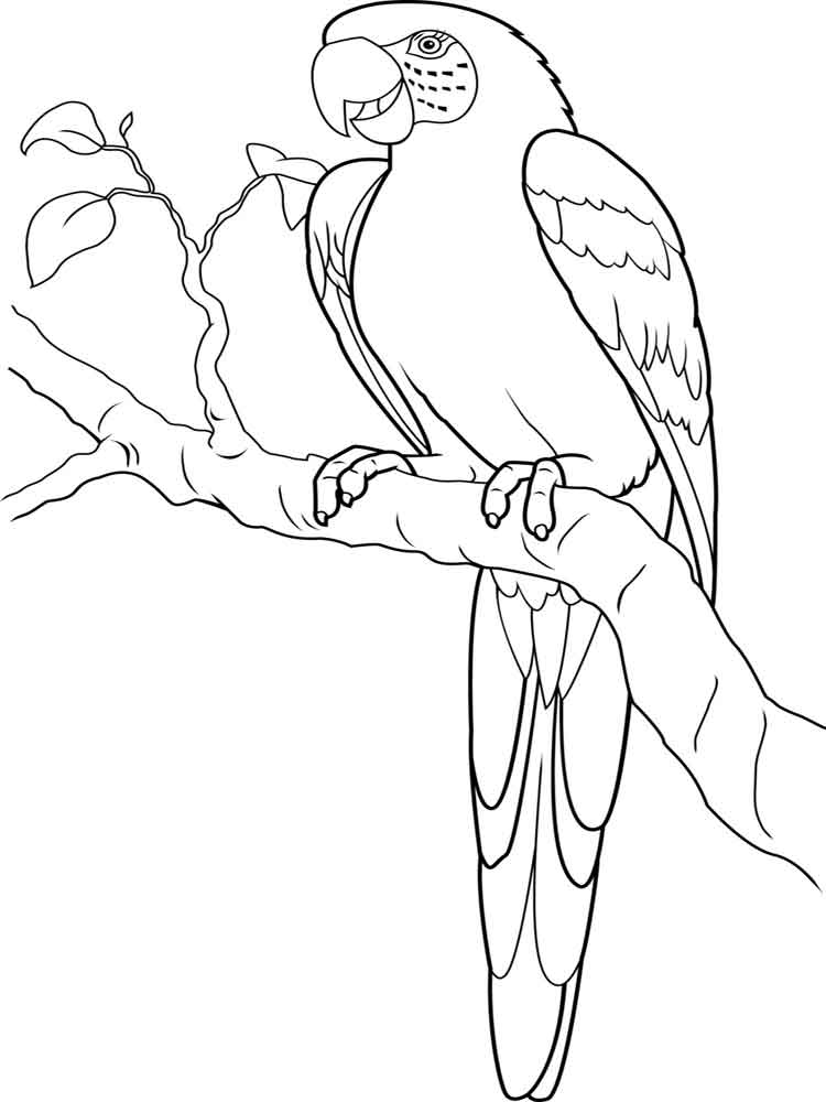 Famous Macaw Bird Coloring Page Ensign - Framing Coloring Pages ...