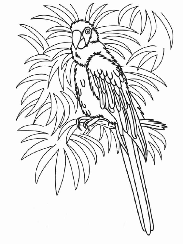 Macaw coloring pages print