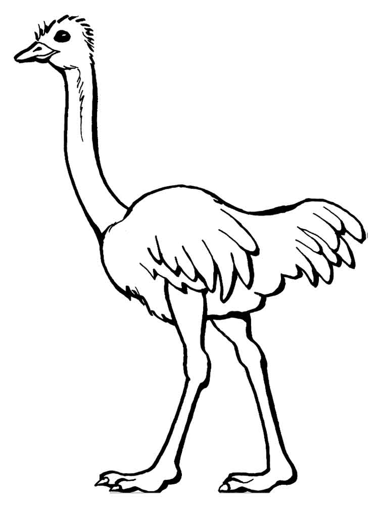 Ostrich coloring pages Download and print Ostrich coloring pages