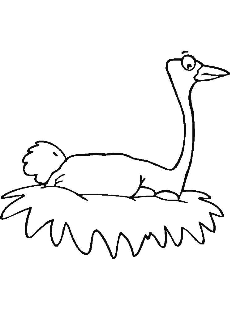 Ostrich coloring pages Download