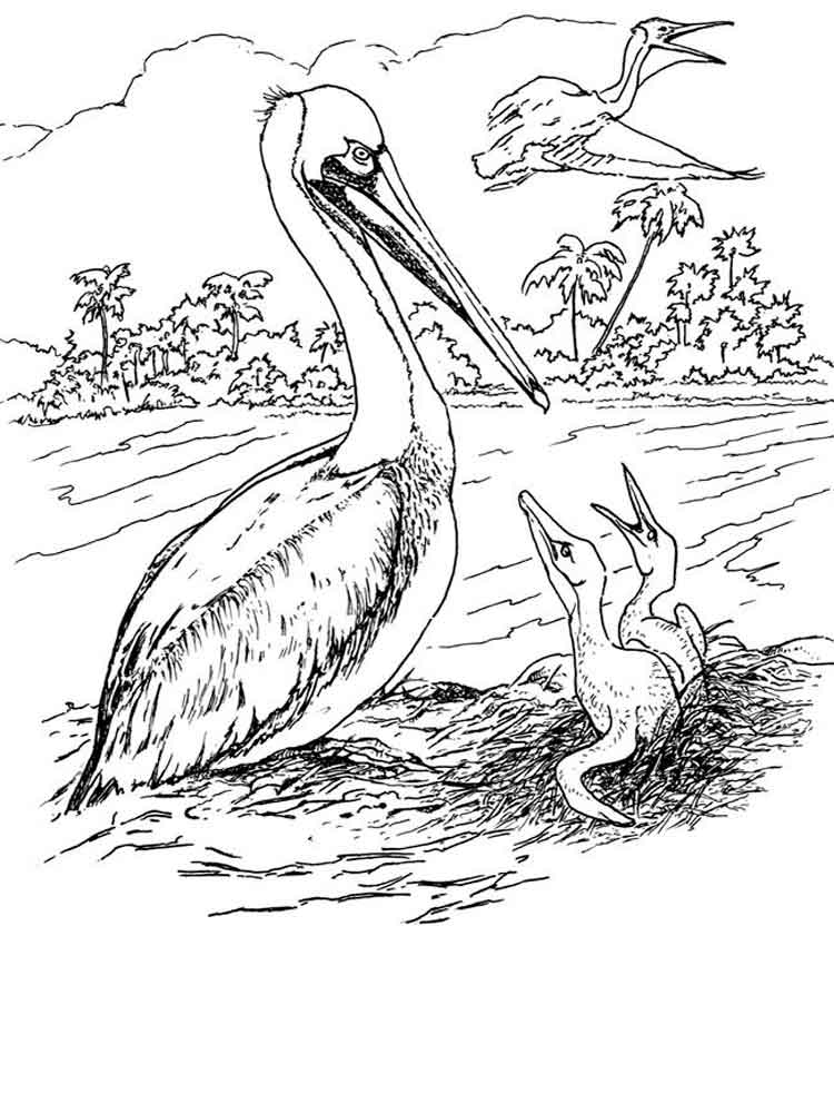 Pelican 01 Coloring Page | Coloring Page Central | 1000x750