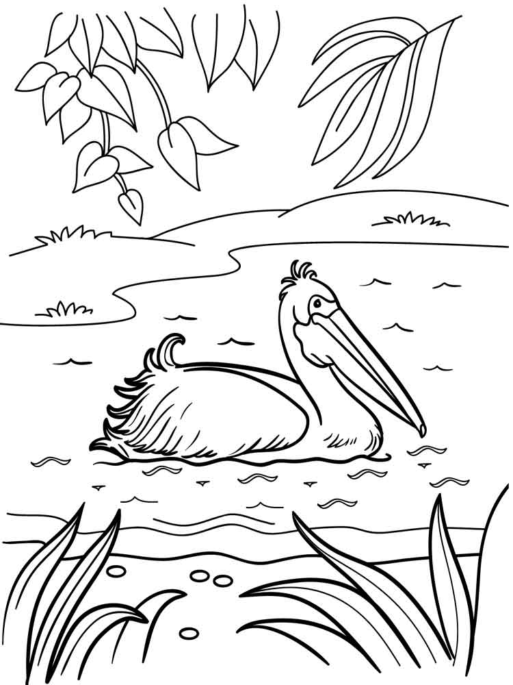 Pelican Coloring Pages Download And Print Pelican