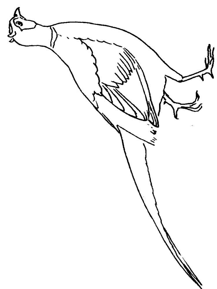 Pheasant coloring pages Download