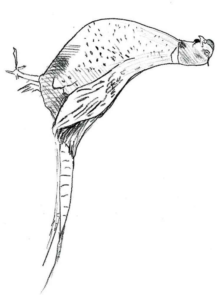 Pheasant Coloring Pages Download And Print Pheasant