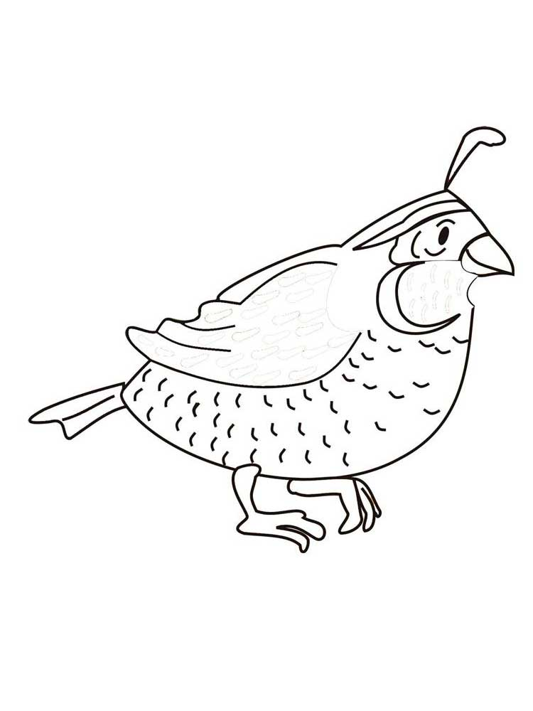 Free Quail coloring pages. Download and print Quail ...