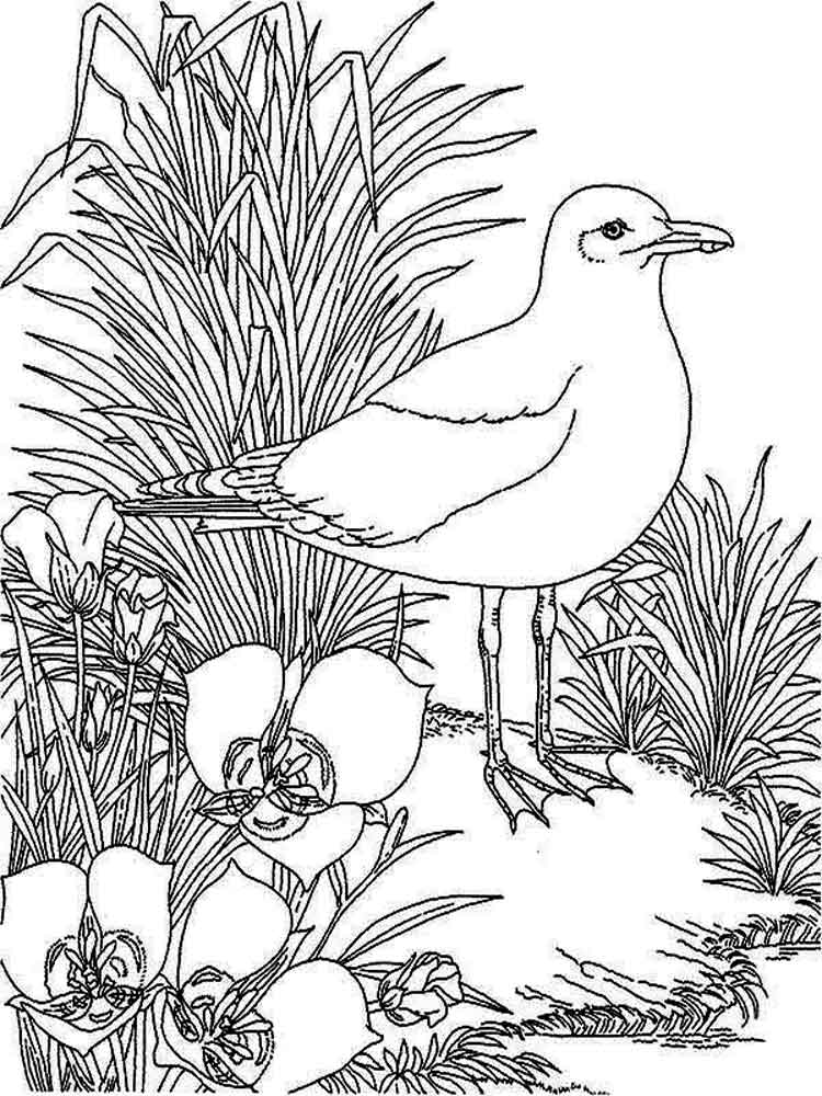 Seagull coloring pages Download and print Seagull coloring pages
