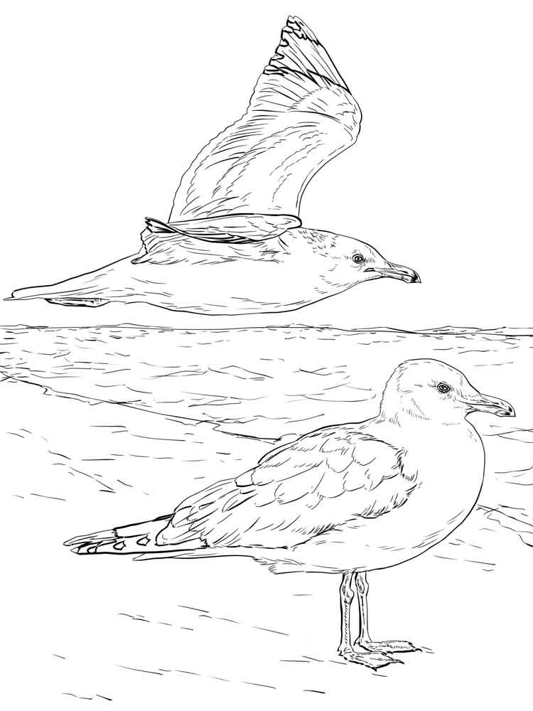 Seagull coloring pages Download and print Seagull