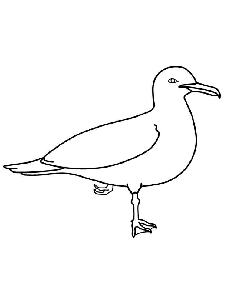 Seagulls Birds Coloring Pages 16
