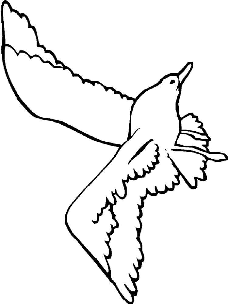 Seagulls coloring pages | Super Coloring - ClipArt Best - ClipArt ... | 1000x750