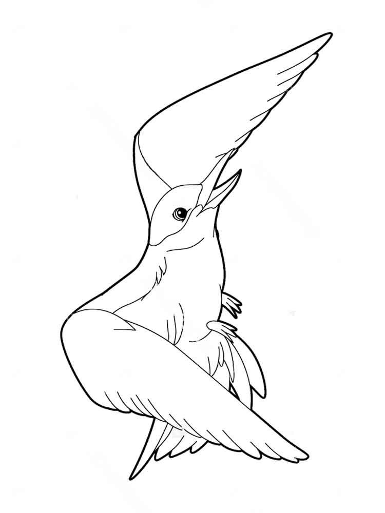 Albatross Coloring Pages