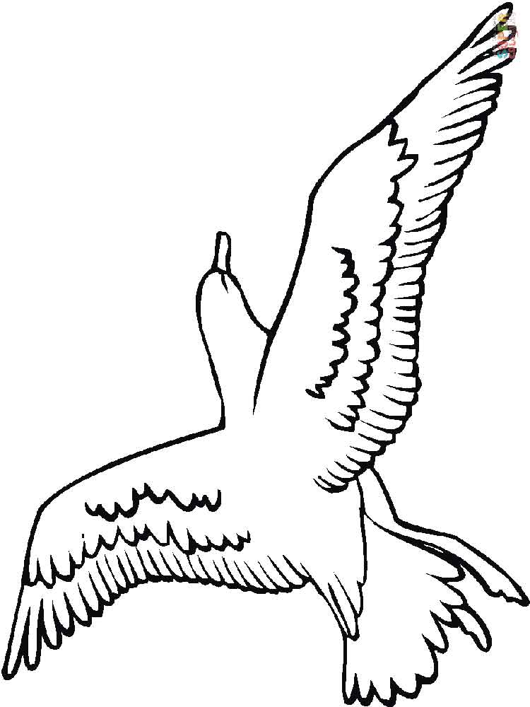 Seagull coloring pages Download