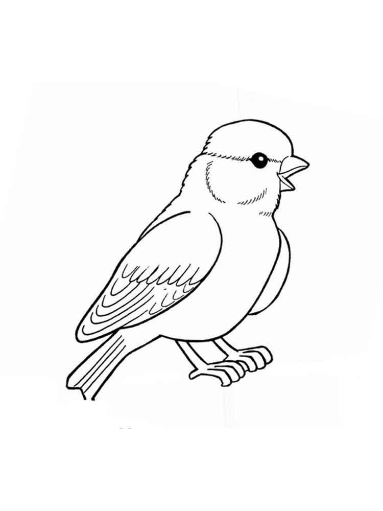 house sparrow page coloring pages