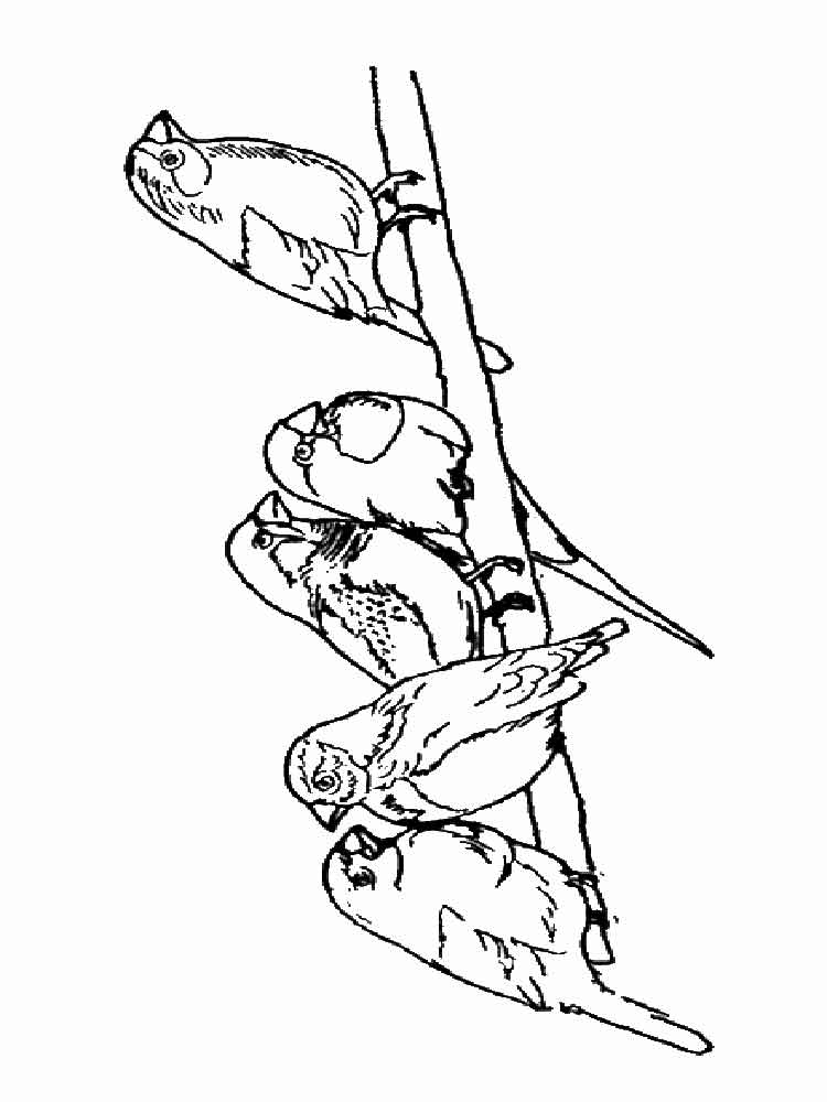 Sparrow coloring pages. Download and print Sparrow ...
