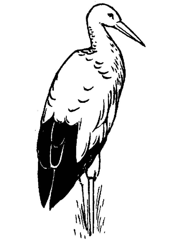 Stork coloring pages Download and print Stork coloring pages