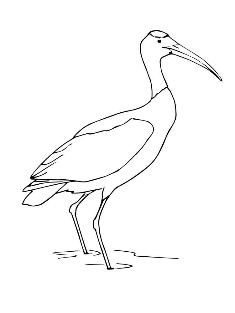 Stork coloring pages Download