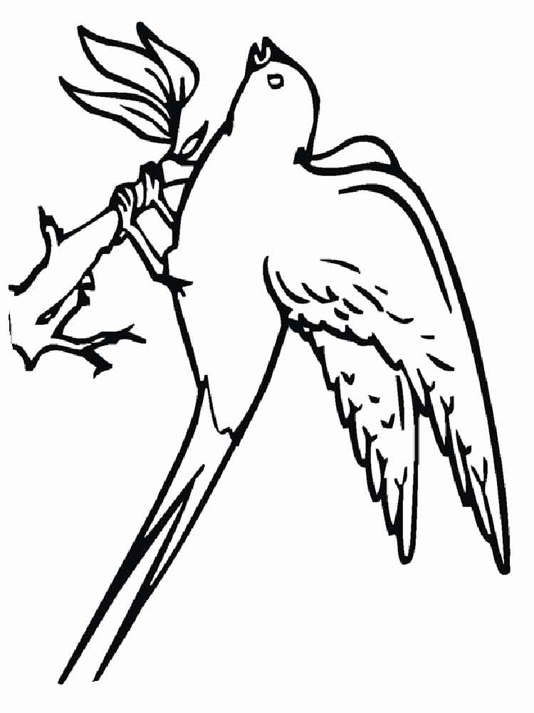Swallow coloring pages Download