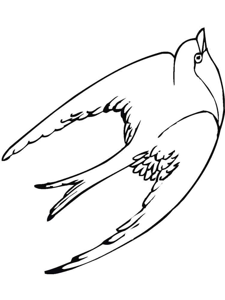 Swallow coloring pages Download and print Swallow