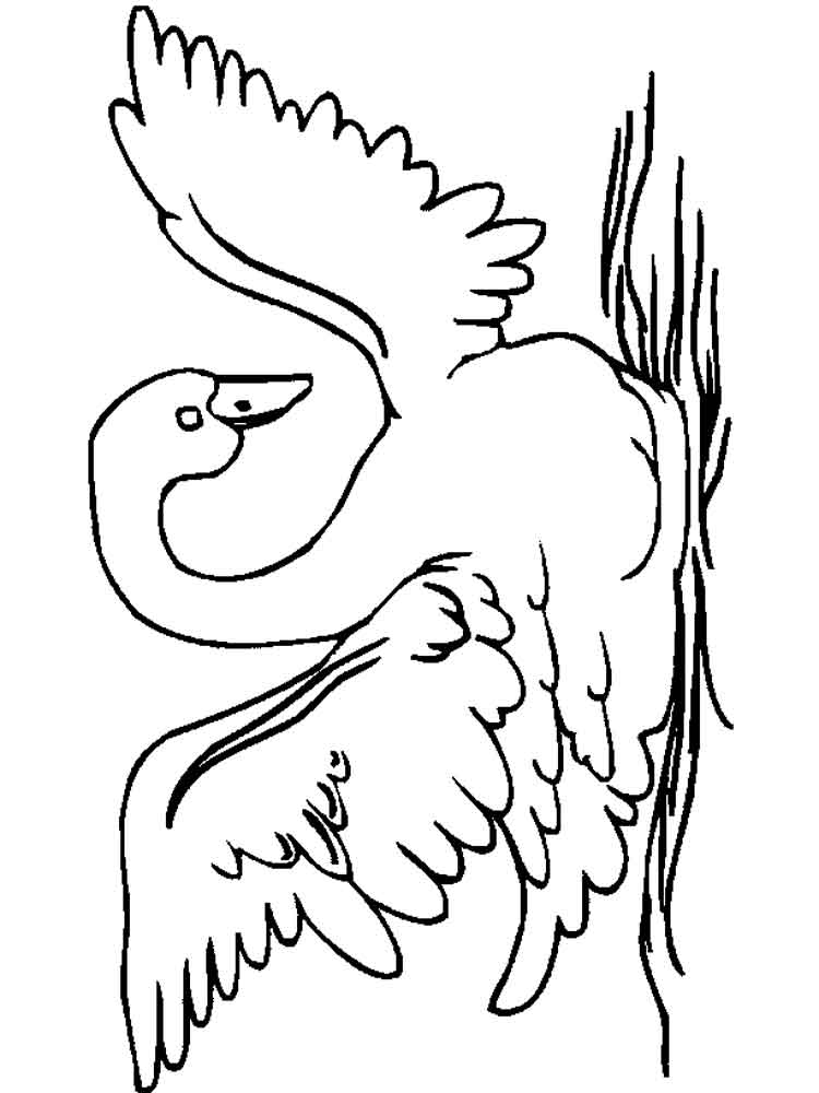 Swan coloring pages Download and