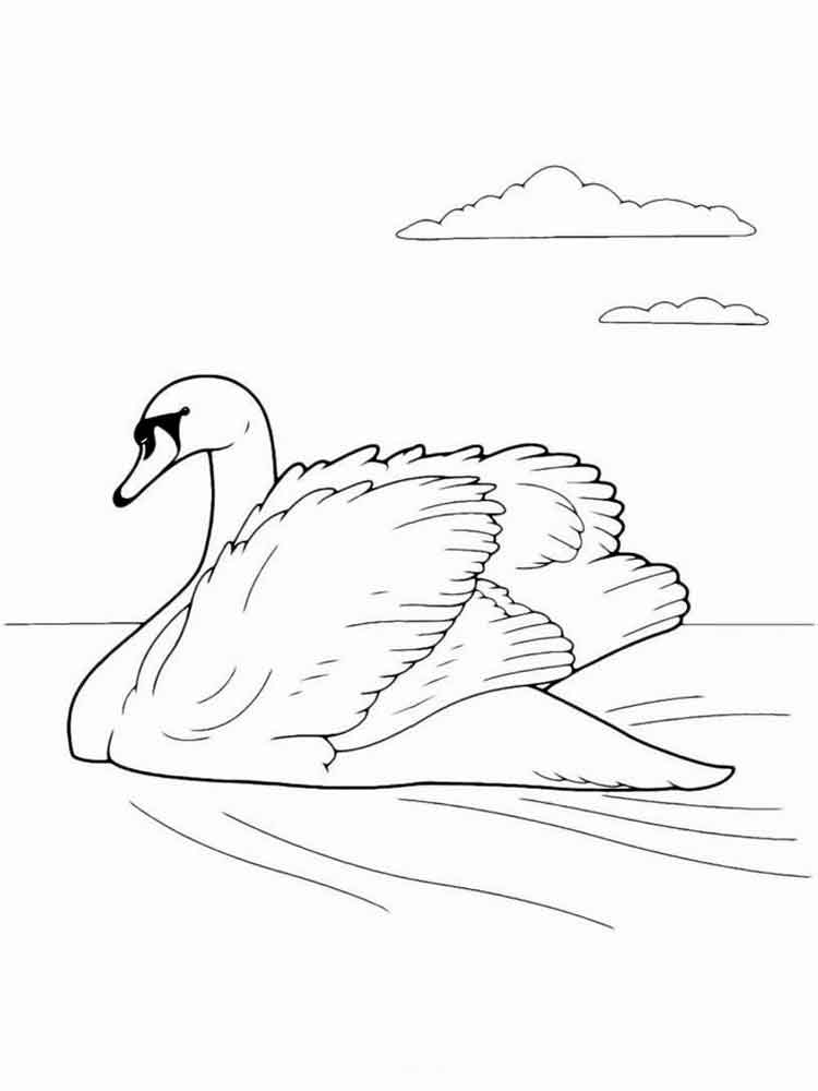 Swans Birds Coloring Pages 2