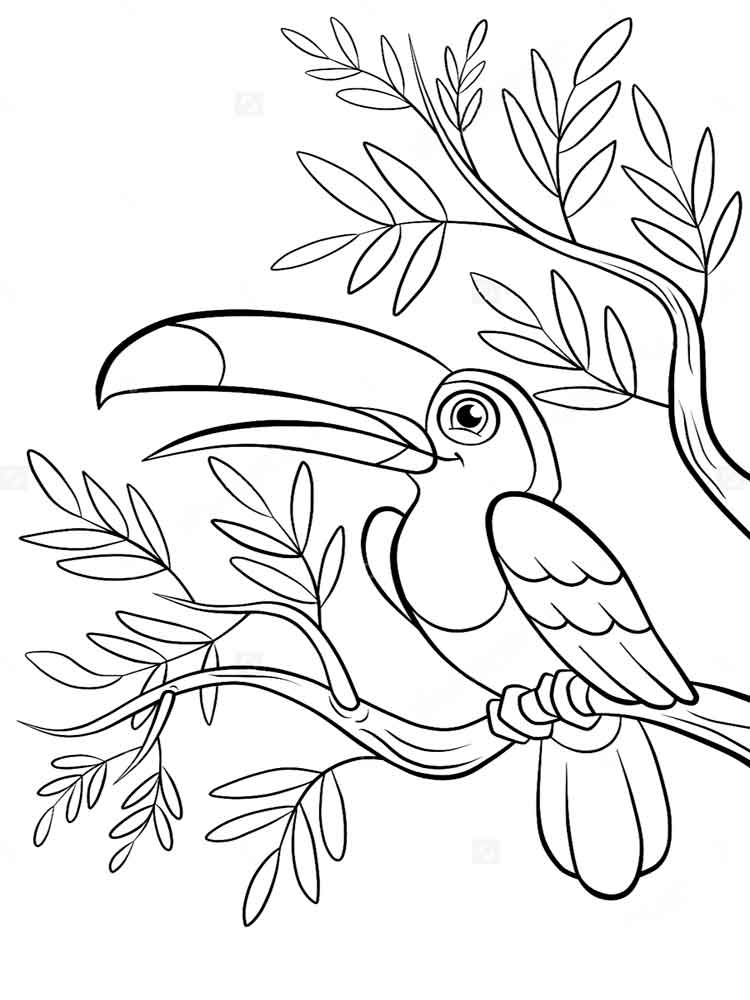 Toucan Birds Coloring Pages 12