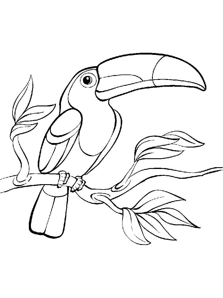 Toucan Birds Coloring Pages 14