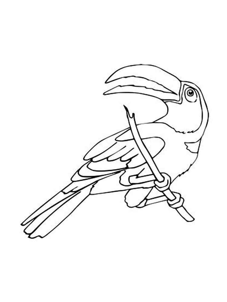 Toucan Coloring Pages Download And Print Toucan Coloring