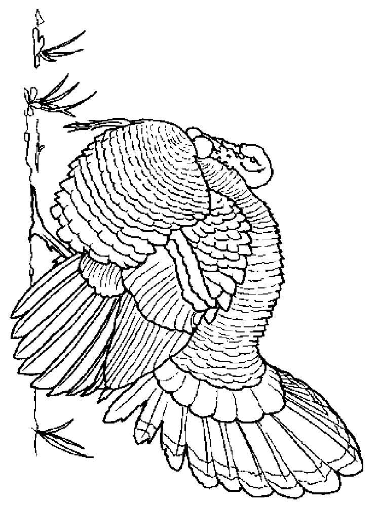Turkeys coloring pages. Download and print Turkeys coloring pages