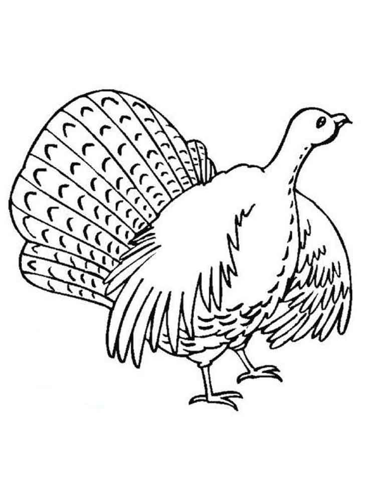 Turkeys coloring pages. Download and print Turkeys ...